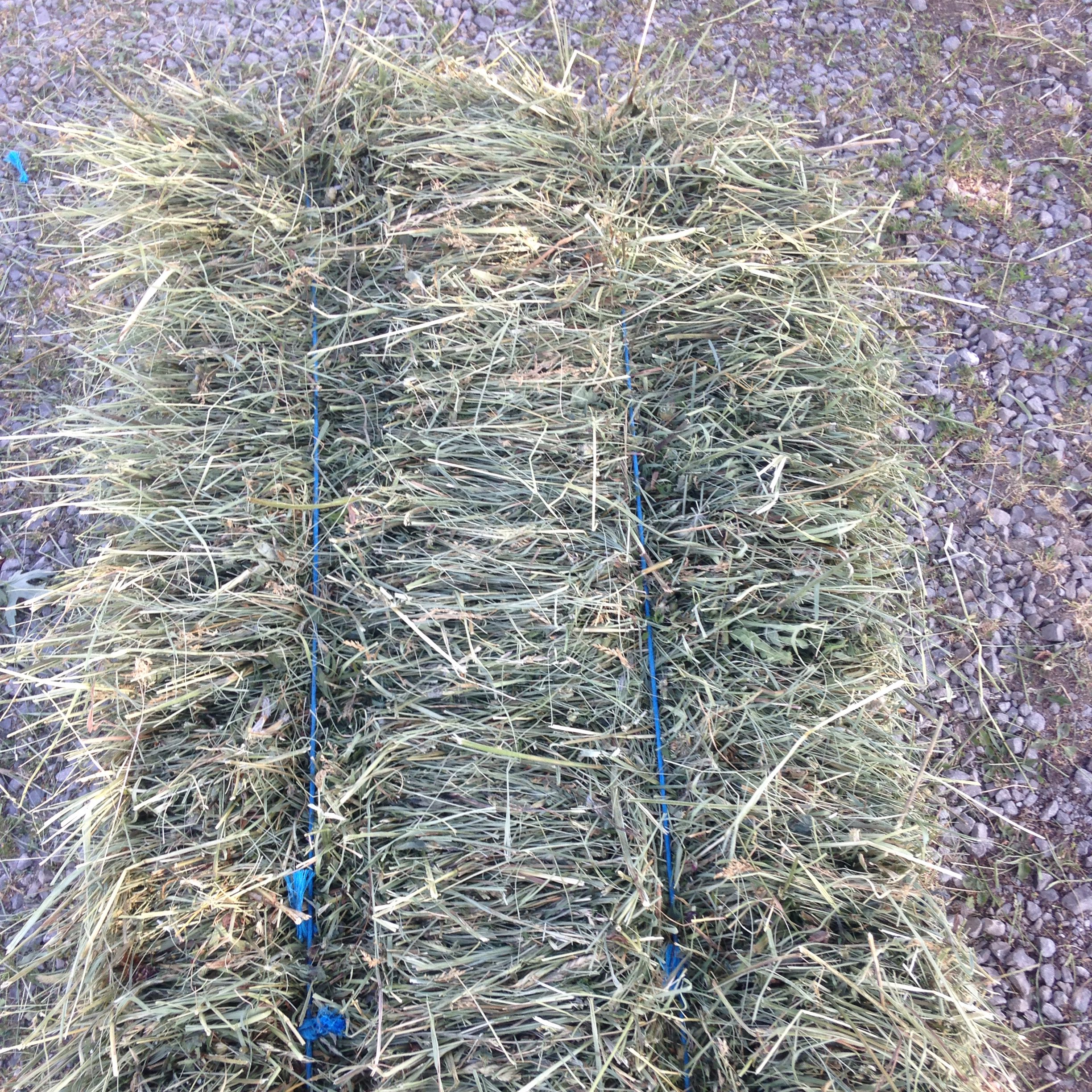 Orchard grass hay pictures Just how many wives does Jacob Zuma have. - The South African