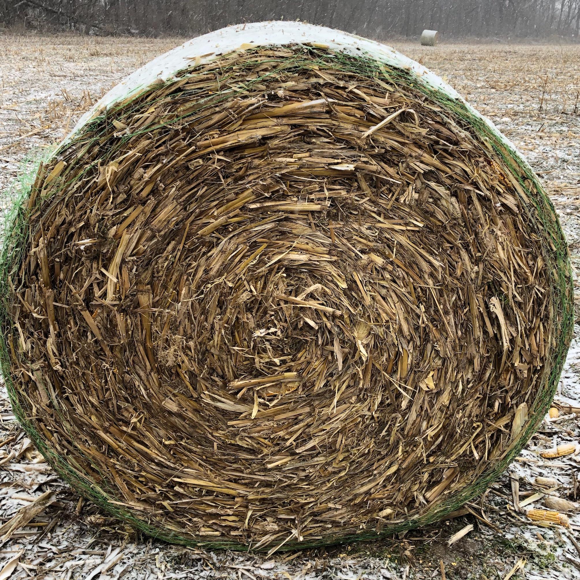 7dd8f8d56f6 Corn Stalks Round Bales