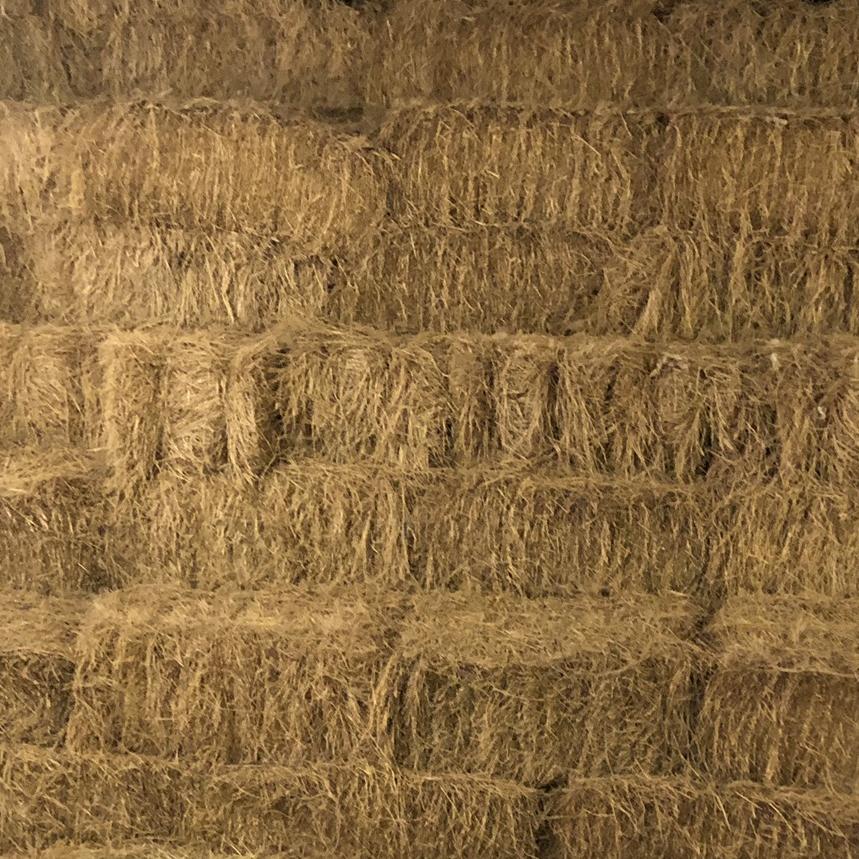 e86fe62fb1c Hay For sale in morton