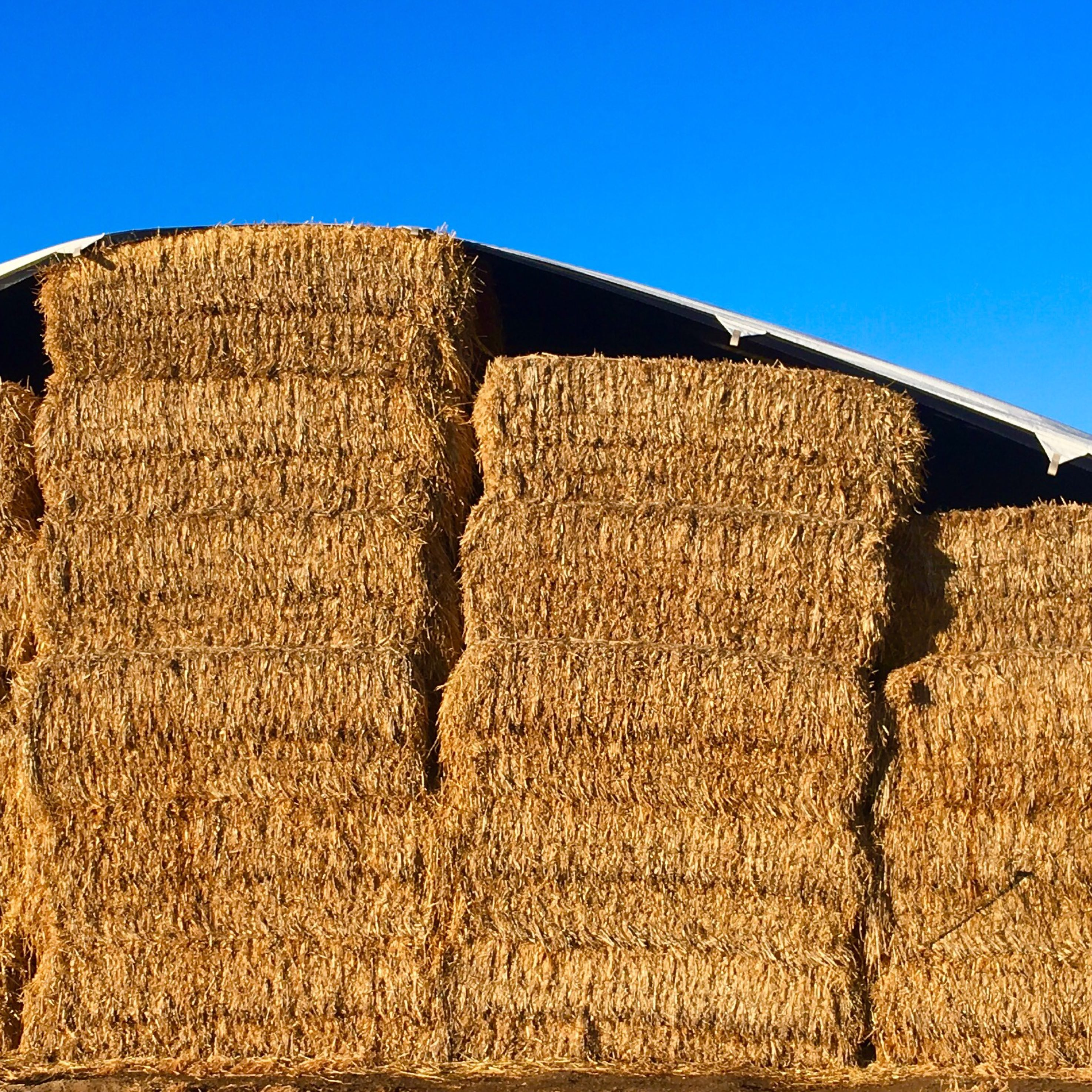 Oat straw Hay For Sale - Hay Map