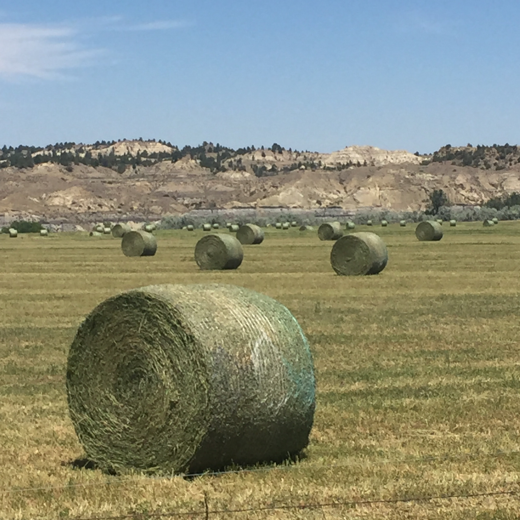hay for sale in montana hay map. Black Bedroom Furniture Sets. Home Design Ideas