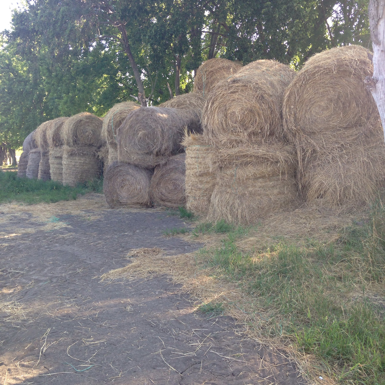 hay for sale in south dakota hay map. Black Bedroom Furniture Sets. Home Design Ideas