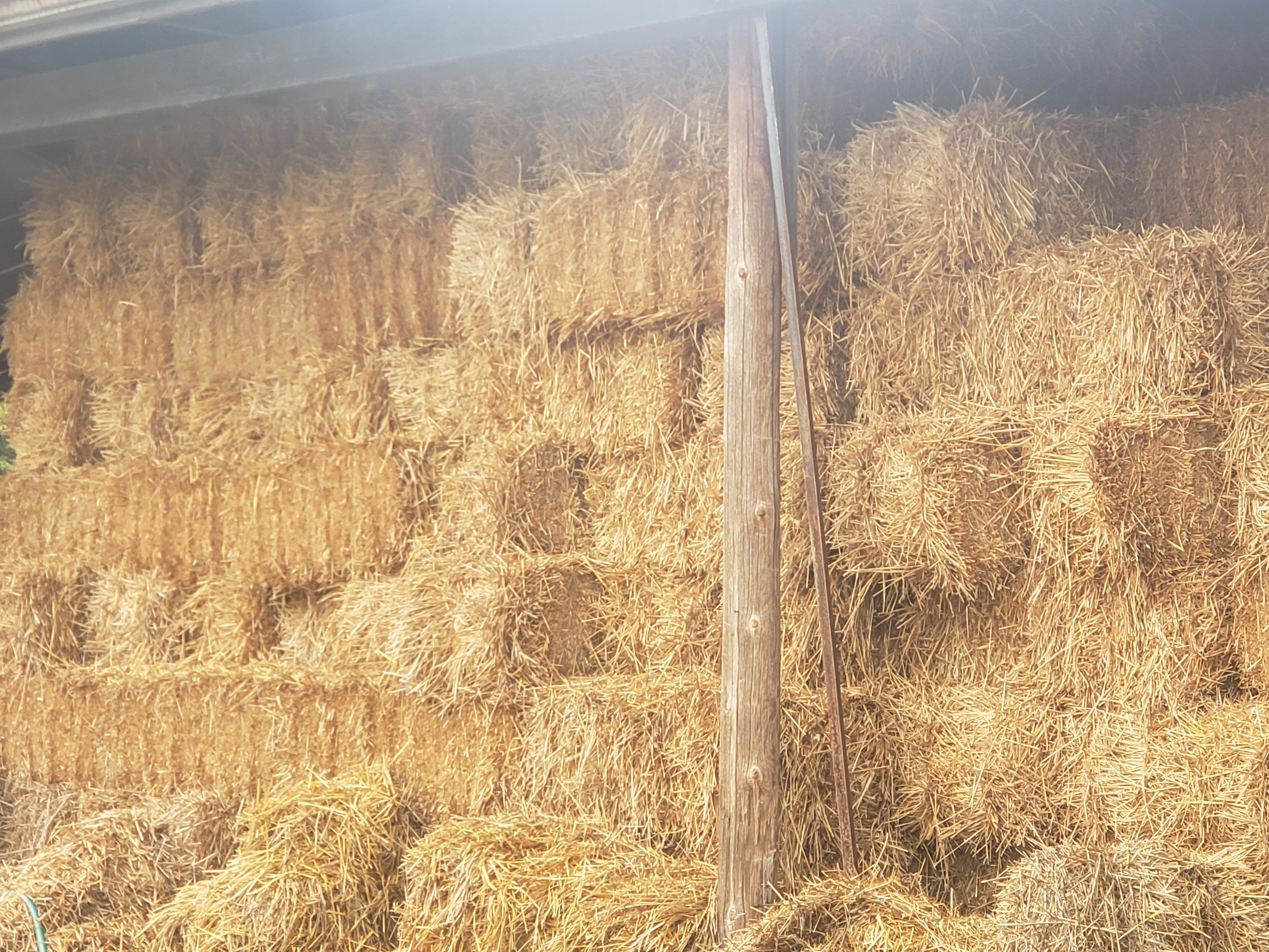 29affb78b45 Hay For sale in waterloo