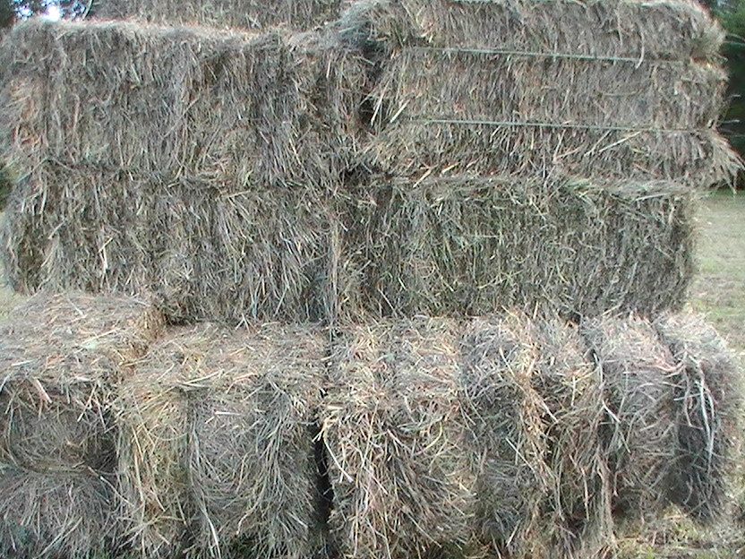 Fescue Hay For Sale - Hay Map