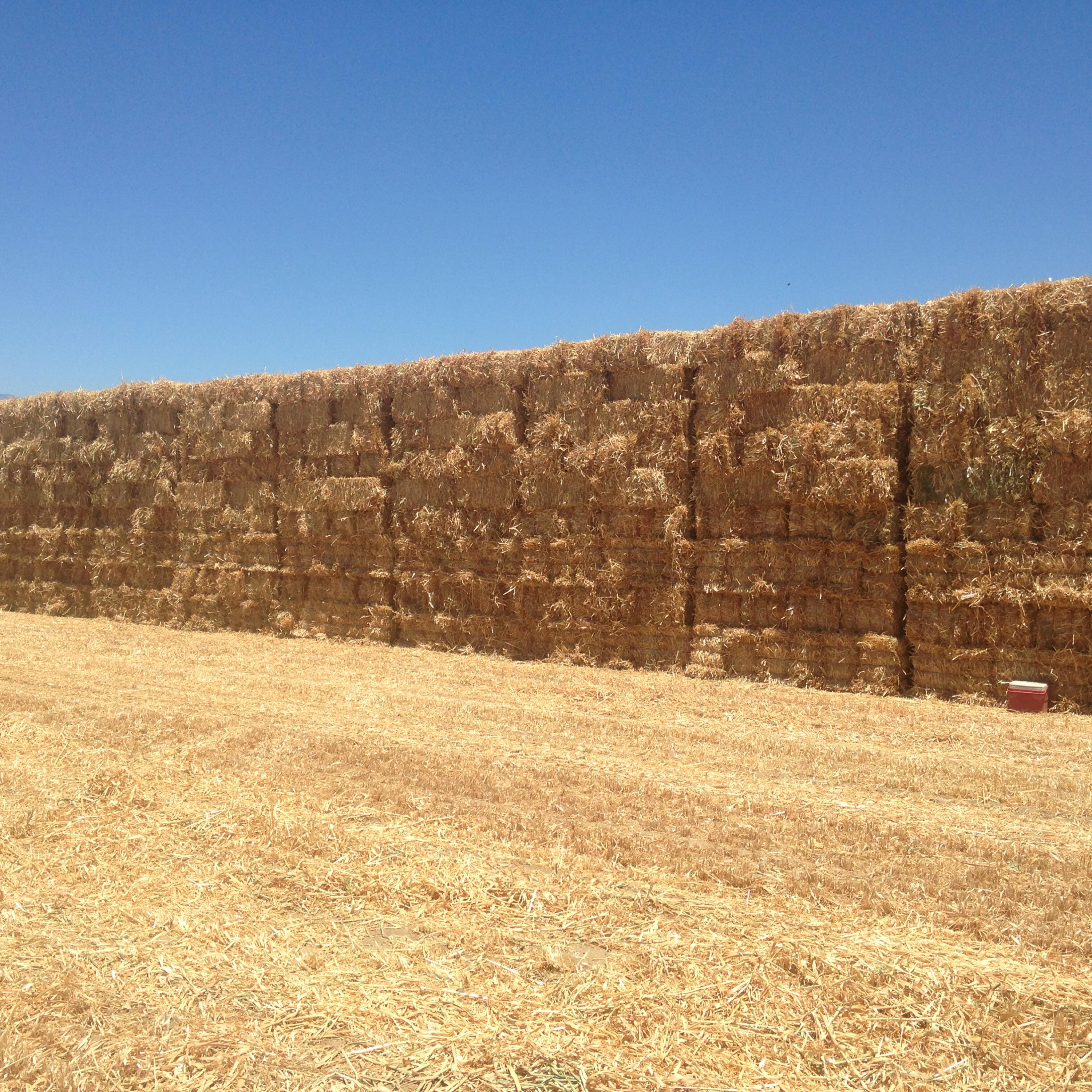 Hay For Sale In The United States - Hay Map